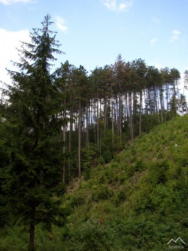 Ostrý Kameň - Brezová